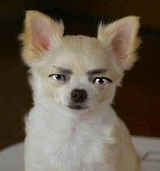 Jin-men-ken, human-faced dog --