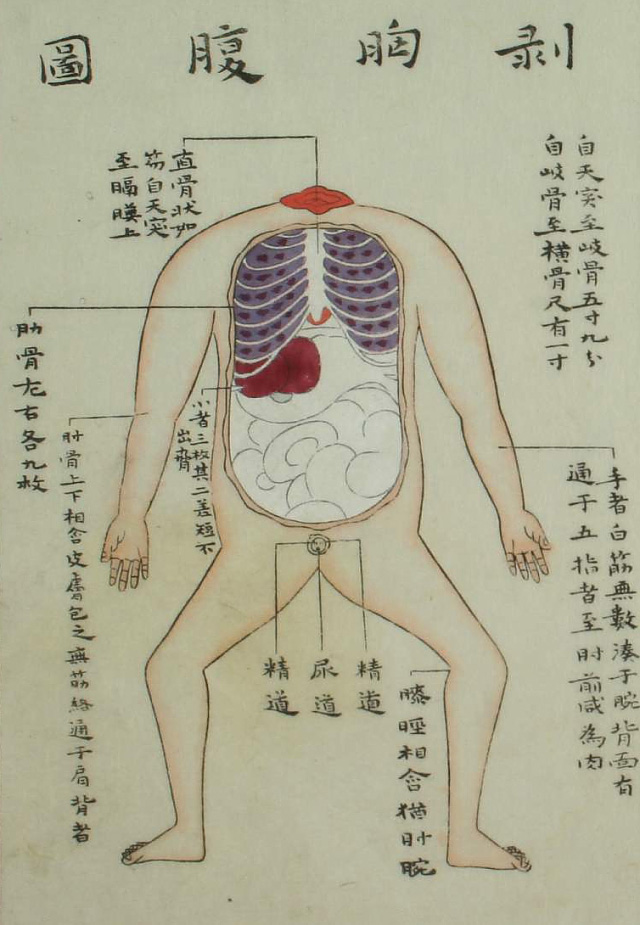 Edo-period medical illustration --