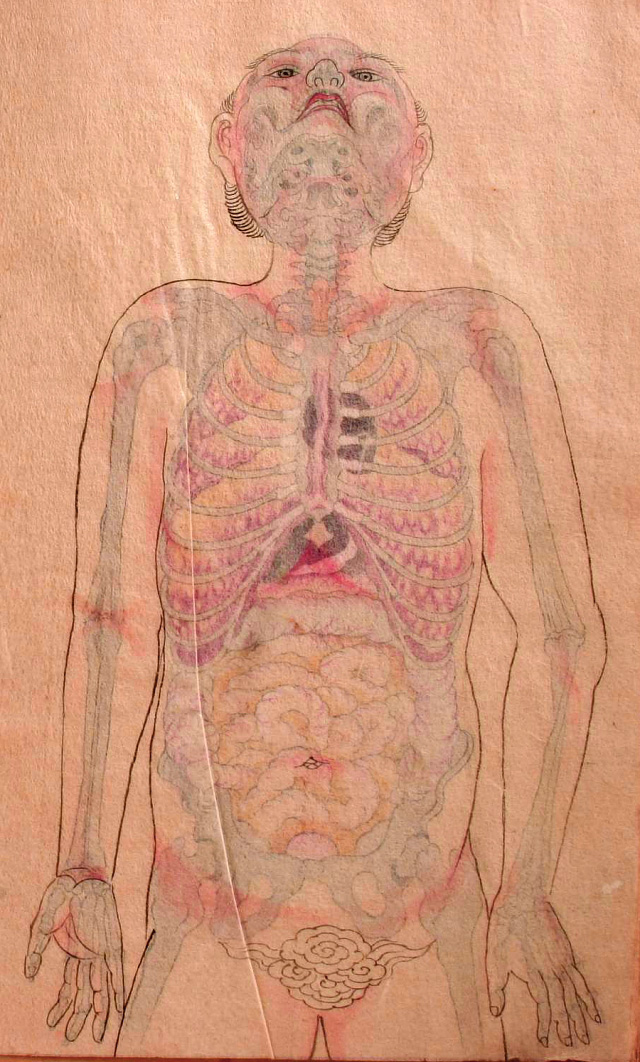 anatomical illustrations from edo period japan pink
