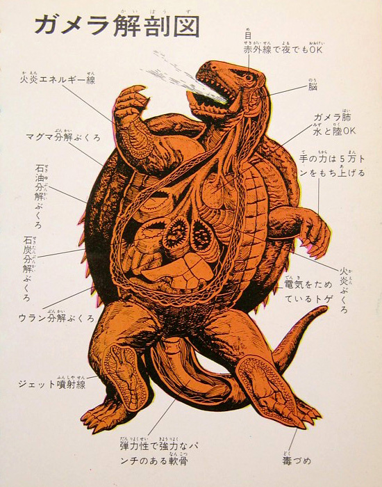 Gamera anatomical illustration --