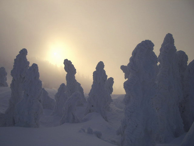 Trees covered in rime ice -- 